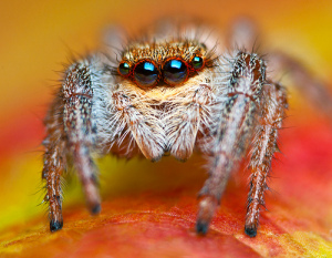what you should know about spiders