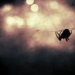5 Facts About Spiders You Probably Didn't Know