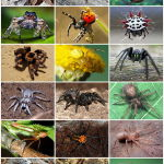 The Different Types of Spider Species